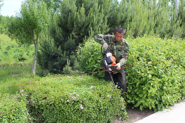 浅议园林树木的冬季修剪